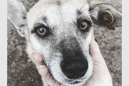 Судьба бездомных собак решена…
